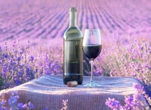 7 Croatian summer wines you must try!
