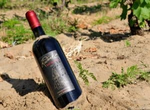 [VIDEO] Kadarka, once forgotten, now the revived modern red wine